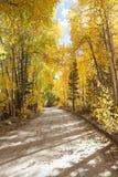 Bos weg in de herfst Royalty-vrije Stock Foto
