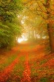Bos weg in de herfst Stock Afbeeldingen