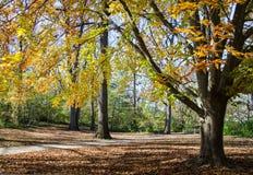 Bos weg in de Herfst Stock Foto's
