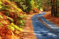 Bos weg in de herfst Stock Foto