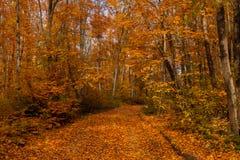 Bos weg in de herfst Royalty-vrije Stock Afbeeldingen