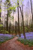 Bos weg in de lente Royalty-vrije Stock Fotografie