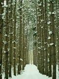 Bos weg in de winter Stock Afbeelding