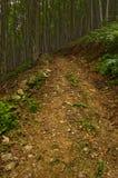 Bos weg die aan de berg leidt Royalty-vrije Stock Foto's