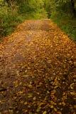 Bos weg die met bladeren wordt behandeld Royalty-vrije Stock Foto's