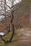 Bos weg door stroom stock foto's