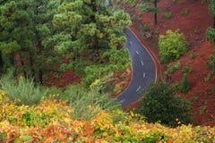 Bos weg, La Palma van de Canarische Eilanden Stock Afbeeldingen
