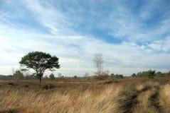 Bos weg met blauwe hemel. Stock Foto's