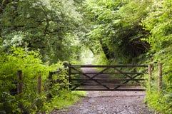 Bos weg met poort Royalty-vrije Stock Foto