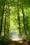 Bos weg in mist stock foto's