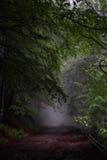 Bos weg in mist royalty-vrije stock afbeelding