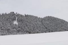 Bos in wintertijd Stock Foto