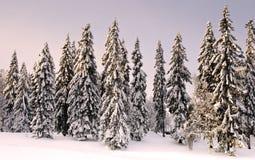 Bos in wintertijd met sneeuw op de bomen. Stock Foto
