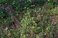 Bos witte bloemen op een open plek op een zonnige dag Royalty-vrije Stock Afbeeldingen