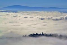 Bos in wolken in de herfst Stock Fotografie