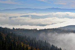 Bos in wolken in de herfst royalty-vrije stock fotografie