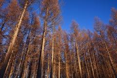 Bos zonder bladeren Stock Afbeeldingen