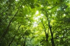 Bos zonlicht Royalty-vrije Stock Afbeeldingen