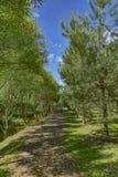 Bos zonnig voetpad Stock Afbeeldingen