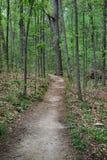 Bosaard wandelingssleep door bomen Stock Fotografie