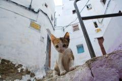 Bosatt fritt på gatorna av Tetouan, Marocko fotografering för bildbyråer