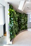Bosatt grön vägg, lodlinjeträdgård inomhus med blommor och växter under konstgjord belysning i mötestyrelse arkivfoton