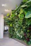 Bosatt grön vägg med blommor och växter, lodlinjeträdgård inomhus royaltyfri foto