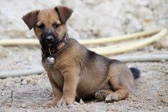 Bosatt hund Royaltyfria Bilder