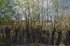 Bosatt staket Arkivfoton