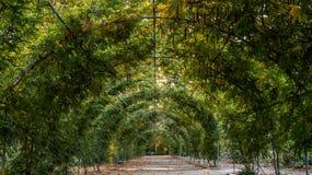 Bosatt tunnel Arkivfoton