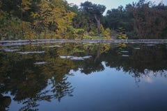 Bosbackroundbezinning over het meer royalty-vrije stock foto's