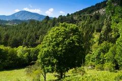 Bosberglandschap in zonnige dag Royalty-vrije Stock Afbeelding