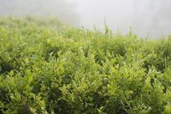 Bosbes in bos Stock Afbeeldingen