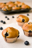 Bosbes cupcakes Stock Afbeeldingen