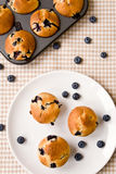 Bosbes cupcakes Royalty-vrije Stock Foto