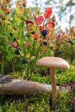 Bosbessen en mushroome stock afbeelding
