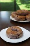 Bosbessenongezuurde broodjes Stock Fotografie