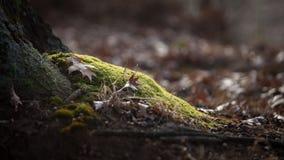 Bosbladeren op mos stock foto's