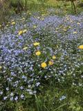Bosbloemen in de tuin Royalty-vrije Stock Foto