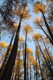 Bosbomen stock afbeeldingen