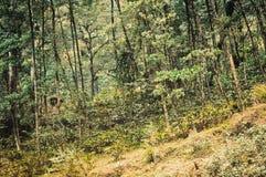 Bosbomen, aard groen hout, zonlicht in zonnige dag Loofbomen onderaan de heuvel aan naaldbos royalty-vrije stock fotografie