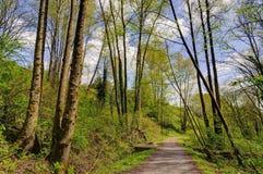 Bosbomen bij de lente Stock Afbeeldingen
