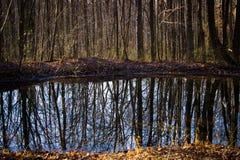 Bosbomen met weerspiegelende vijver in de herfst Stock Fotografie