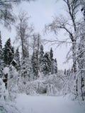 Bosbomen na de zware de wintersneeuwval stock afbeeldingen