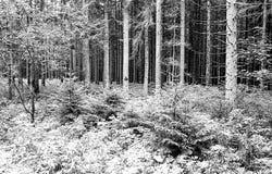 bosboomboomstammen en gebladertespruit op zwart-wit filmverstand Royalty-vrije Stock Foto's