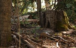 Bosboomstomp het groeien mos in de zomer royalty-vrije stock afbeeldingen