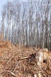 Bosbouw Stock Afbeelding