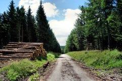 Bosbouw Stock Fotografie