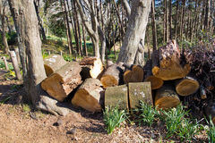 bosbouw Royalty-vrije Stock Afbeelding