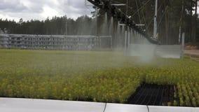 Bosbouw automatisch het water geven materiaal stock video